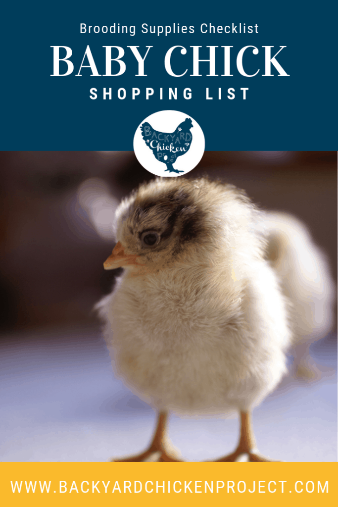 Figuring out what you need to brood chicks can be overwhelming, so we've made it easy with this chick shopping list! #homesteading #homestead #backyardchickens #chickens #raisingchickens #poultry