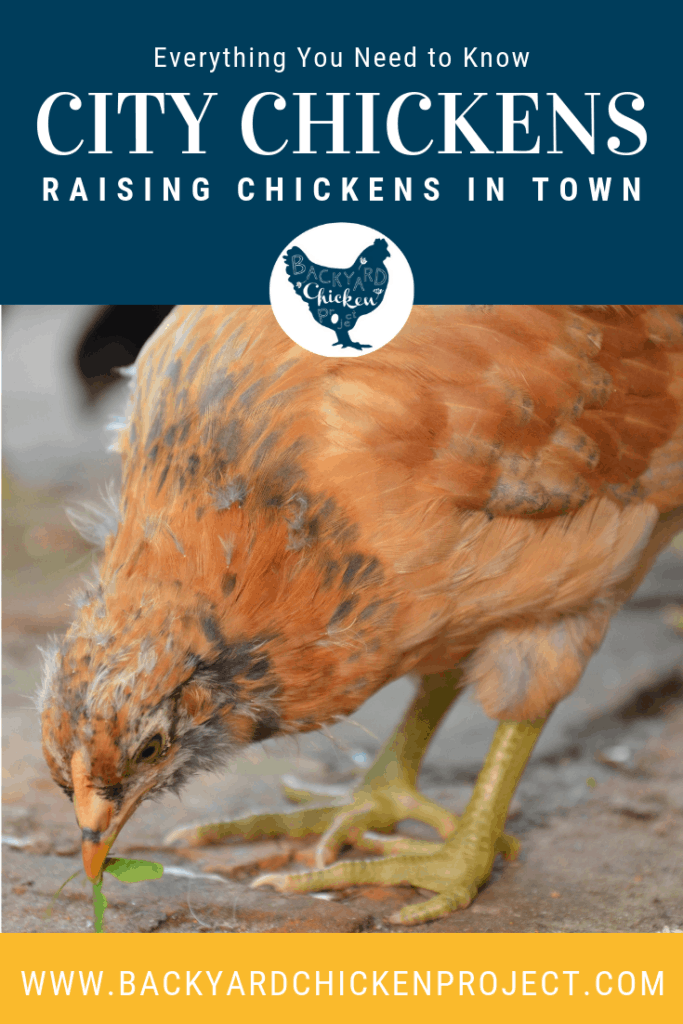 The Ultimate Guide to Raising Chickens in the City