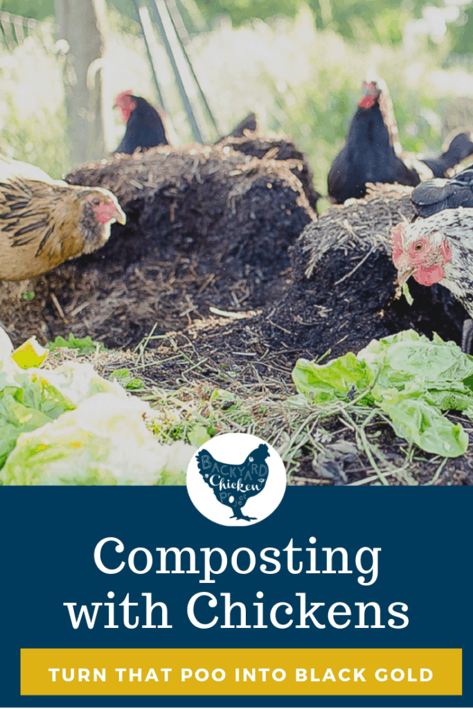Urban and suburban chickens are fun, but what do you do with all the poop?! Composting with chickens is totally the way to go to turn all that poo into glorious soil! #homesteading #homestead #backyardchickens #chickens #raisingchickens #poultry