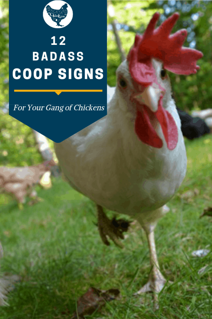 You know what your gang of chickens deserves? A badass coop! We've picked out a dozen chicken coop signs to help you snazz up the place. Or, you know, give your chickens something to poop on. #homesteading #homestead #backyardchickens #chickens #raisingchickens #poultry