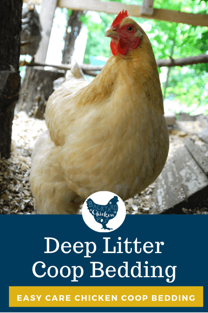 How to Use Deep Litter Bedding in the Chicken Coop #homesteading #homestead #backyardchickens #chickens #raisingchickens #poultry