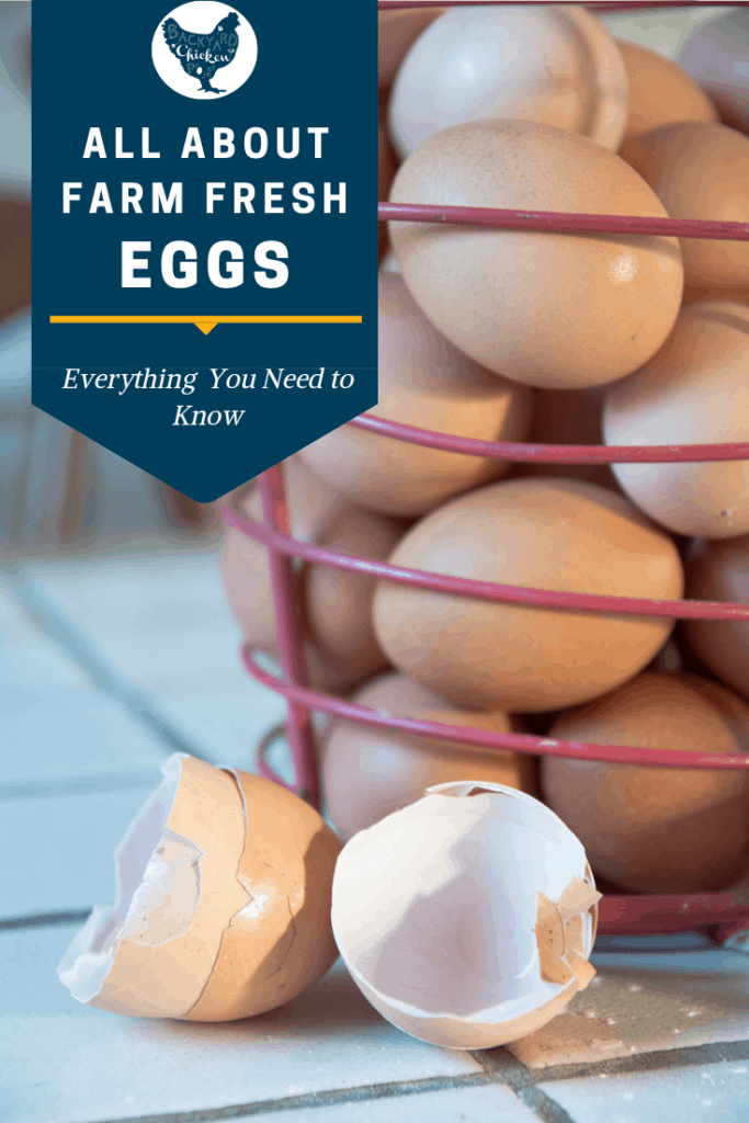 There's no doubt that farm fresh eggs are good for you, but boy can they be WEIRD! They come in different colors and sizes, what's up with that? All your questions are answered in this post. #homesteading #homestead #backyardchickens #chickens #raisingchickens #poultry