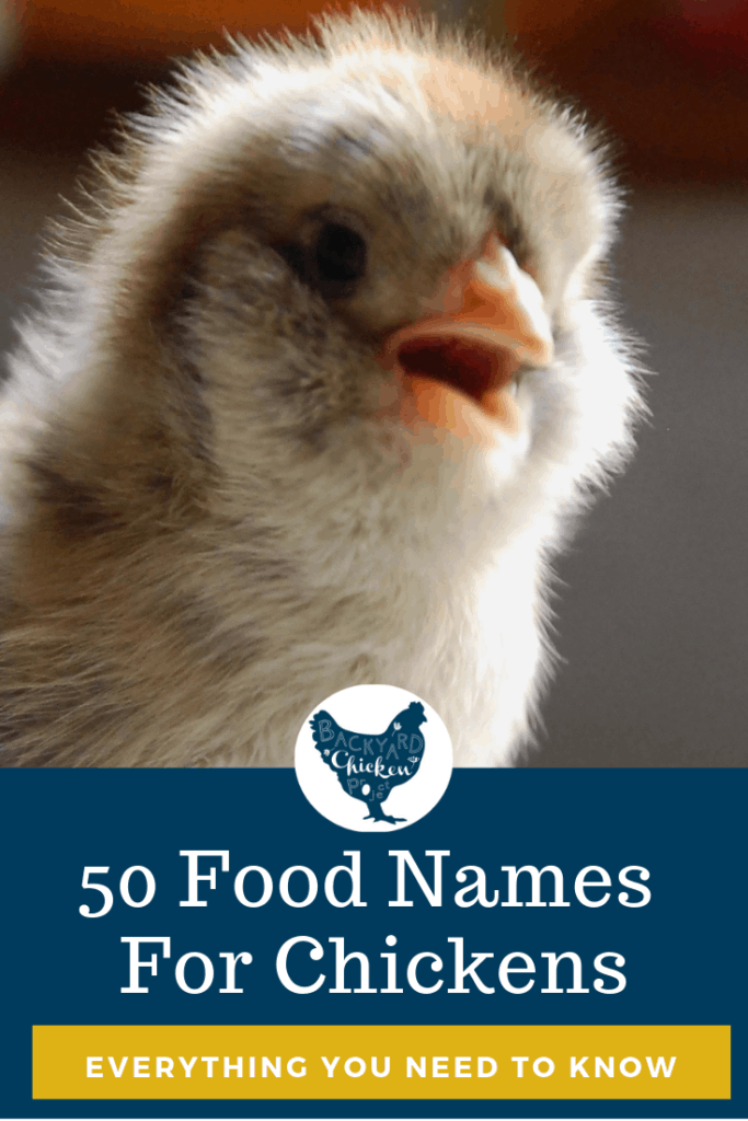 Are you struggling to find names for your new little ball of fluff? Struggle no more! We've found more than 50 hilarious food names for chickens that are sure to bring a smile to your face! #homesteading #homestead #backyardchickens #chickens #raisingchickens #poultry