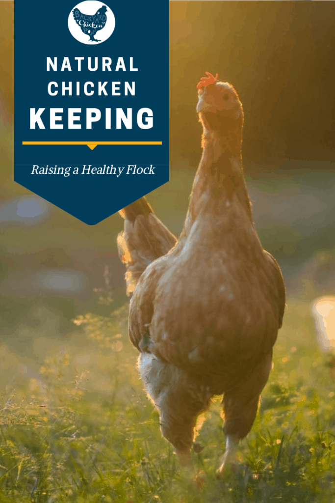 The Natural Chicken Keeping Handbook is an absolute must have for newbie and seasoned chicken keepers alike! #homesteading #homestead #backyardchickens #chickens #raisingchickens #poultry