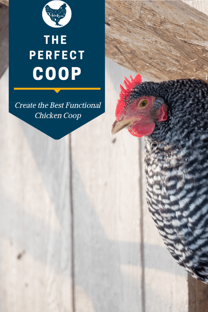 One of the toughest things for chicken keepers is how to build a chicken coop. This post gives you the 10 essentials to perfect chicken coop design!#homesteading #homestead #backyardchickens #chickens #raisingchickens #poultry #homesteading #homestead