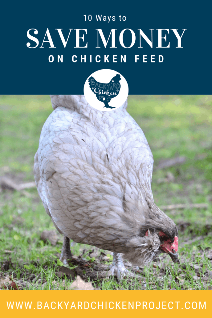 Raising chickens can get expensive but these 10 cheap chicken feed ideas will help you save money and most of them require very little of you! #chickens #backyardchickens #keepingchickens #raisingchickens #homesteading #homestead
