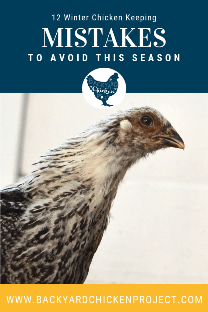 Are you making these winter chicken keeping mistakes? Check our list and make adjustments so your chickens can live their best life this winter! #homesteading #homestead #backyardchickens #chickens #raisingchickens #poultry