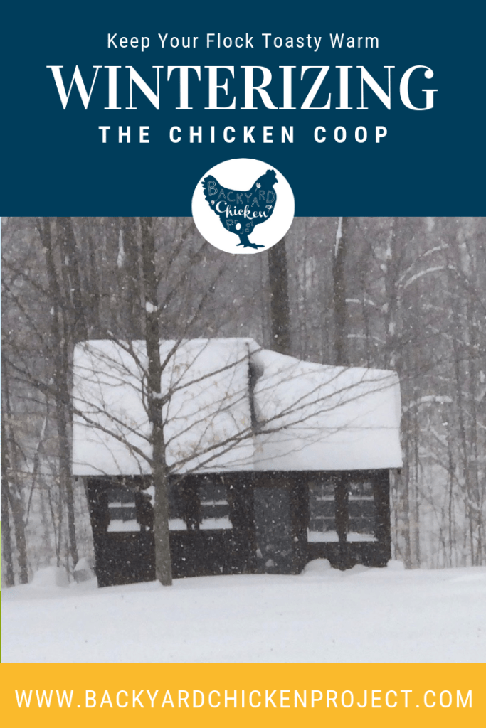With winter fast approaching, it's important to take steps to winterize the chicken coop so you can keep your flock toasty warm when the temps drop! #homesteading #homestead #backyardchickens #chickens #raisingchickens #poultry