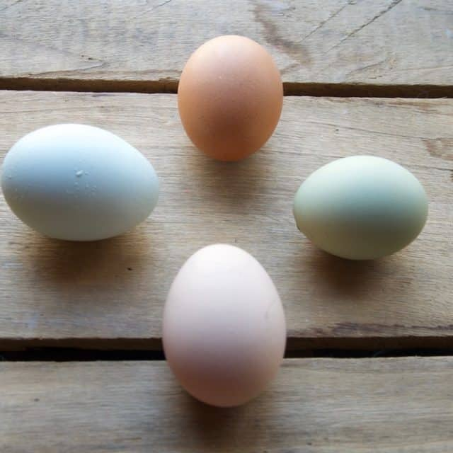 Reasons Hens Aren't Laying Eggs and How to Help