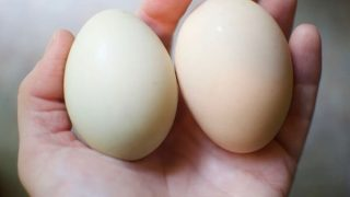 Make your eggs last longer with these simple tricks