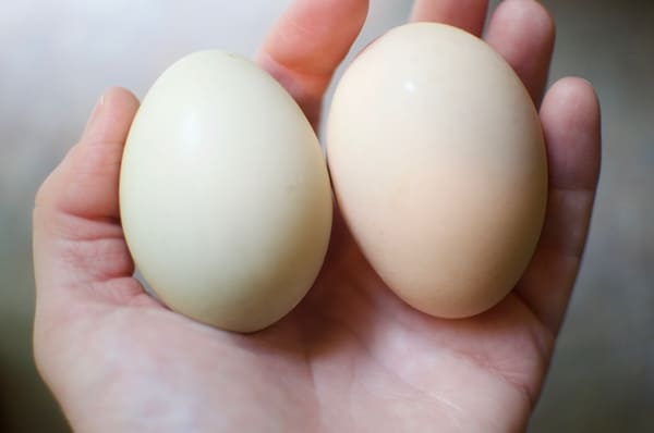 6 Ways to Preserve Chicken Eggs