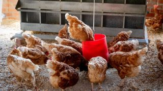 What do you REALLY need for raising chickens? We've tried it all, and these 10 products made our list.