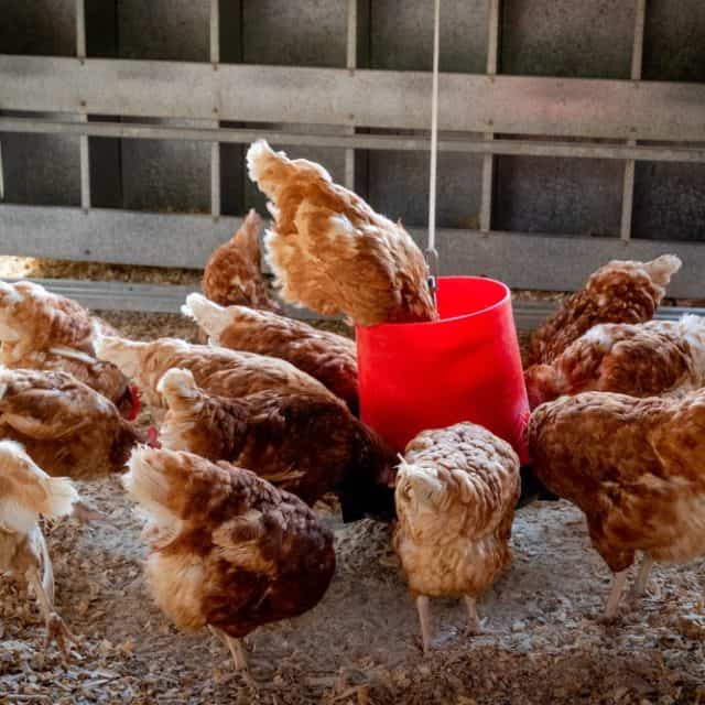 Our Top Ten Most Used Chicken Products