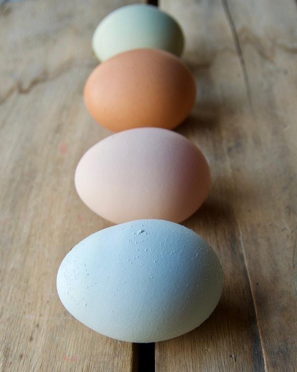 6 ways to preserve chicken eggs