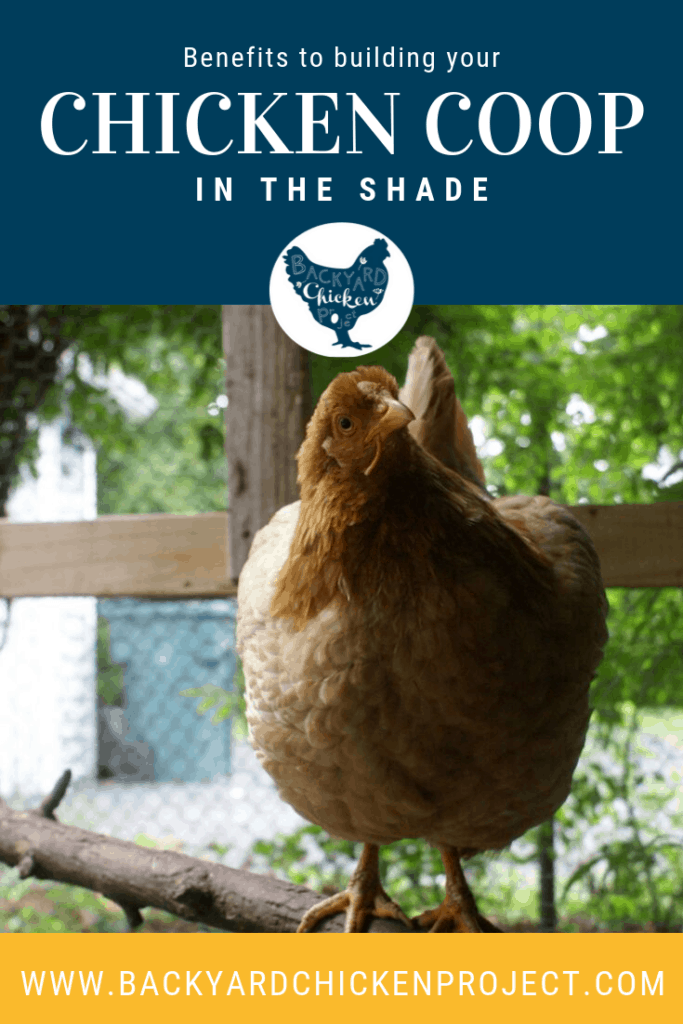 Building the chicken coop in shade has tons of great benefits for your flock. Learn the 4 reasons you should consider giving your hens some shade!