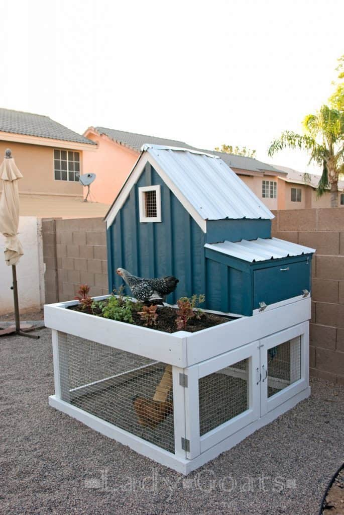 Urban chicken coop plans come in all shapes and sizes, from functional to fancy! Find your perfect DIY chicken coop today!