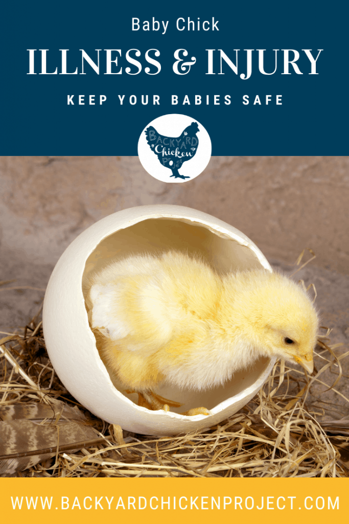 There's no doubt about it, baby chicks are adorable and fun. However, they come with a lot of responsibility for their health and well being, and it's good to be prepared about chick illness and injury before it happens!