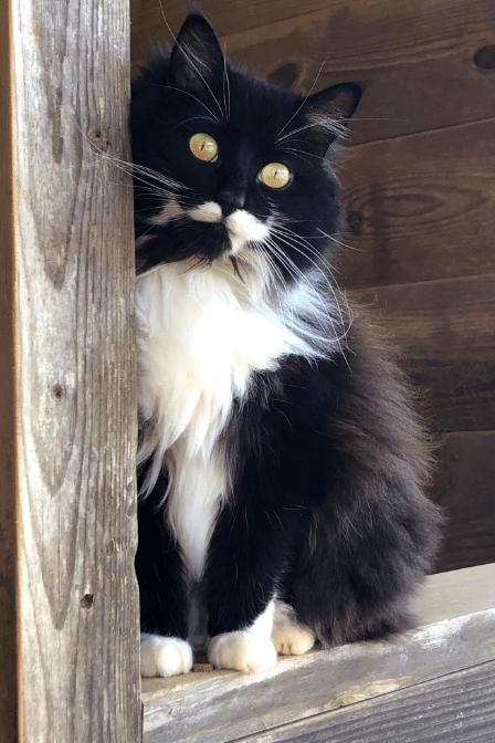 A barn cat.