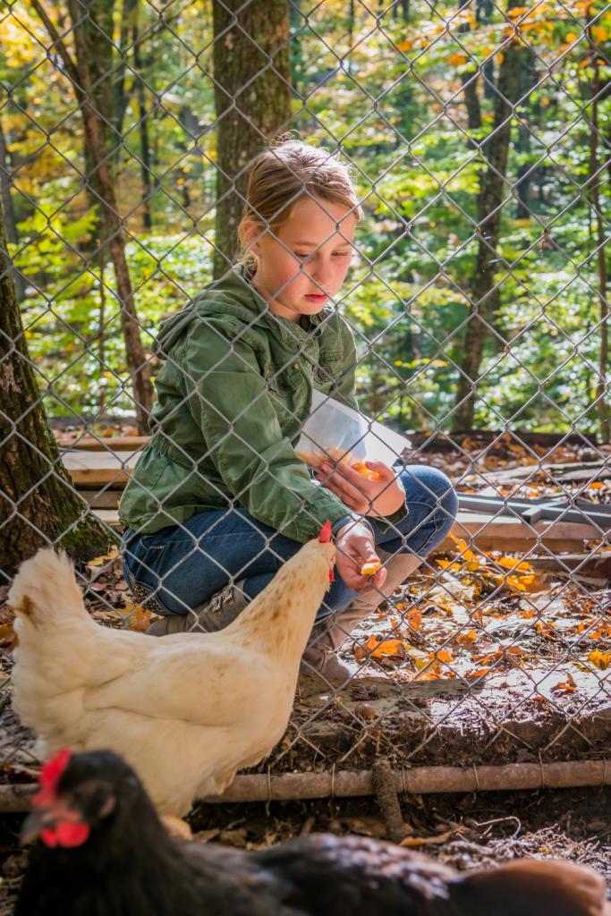 A girl feeding chickens through a fence